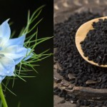 Egyptian Black Cumin Seed Oil – healing for all deseases