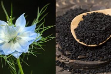 Egyptian black (cumin) caraway seed oil iherb