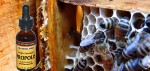 The extract of propolis (bee-glue) for the prevention of bad colds and flu